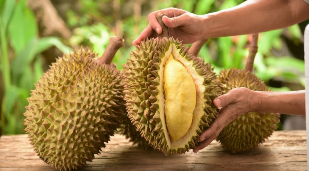 Kabar Gembira, Inilah Manfaat Durian Bagi Kesehatan